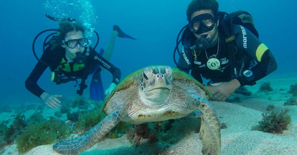 Scuba Diving, Fernando de Noronha