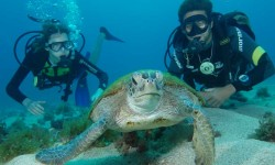 Scuba Dive Brazil