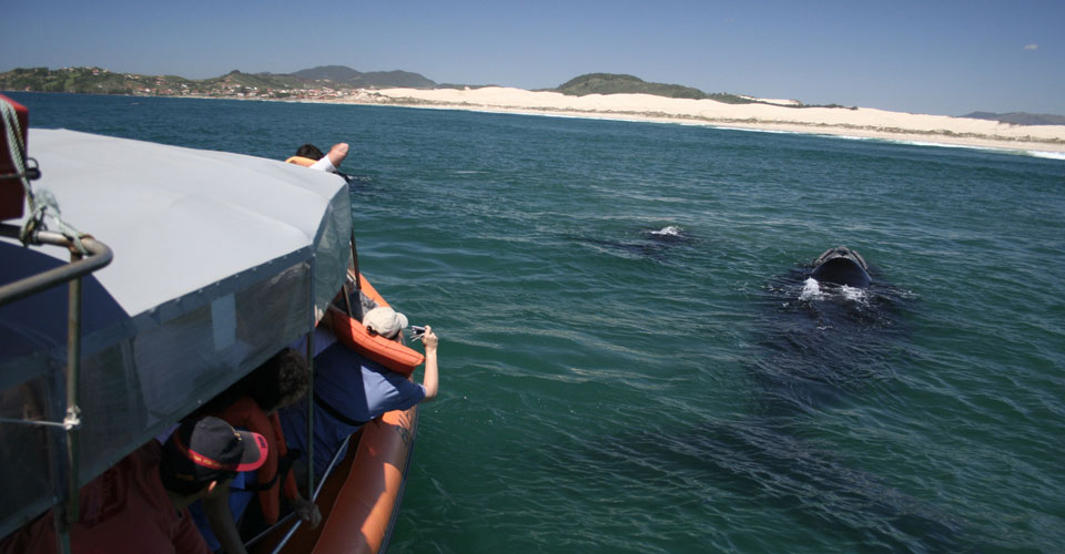 Whale Watching, Brazil