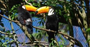 Parque das Aves, Iguassu Falls