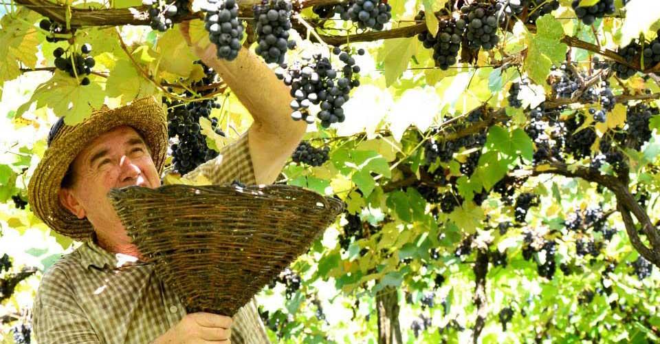 Brazil wine tours