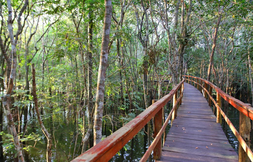 The walkways between each bungalow and the main lodge areas. Juma, Amazon, Brazil
