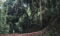 Amazon- Rainforest Brazil