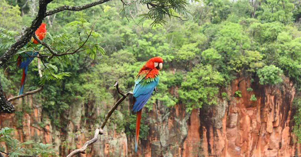 Bonito - Buraco das Araras - Nature tourism in Brazil