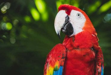 Brazil is home to many colourful macaw species